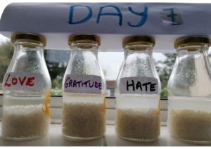 YSA Experiment day7 all